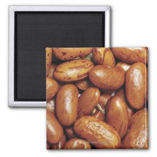 腎臓豆のクローズアップ マグネット