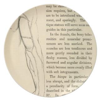 腕のヴィンテージの解剖学|の静脈(1852年頃) プレート