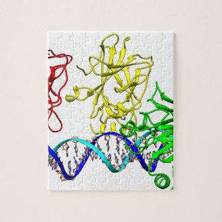 腫瘍のサプレッサーp53 ジグソーパズル