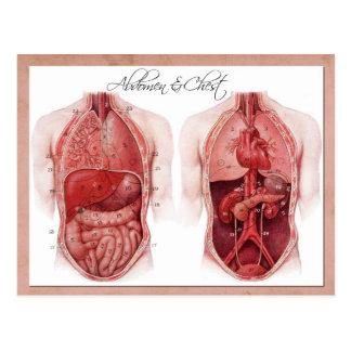 腹部および箱の解剖学 ポストカード