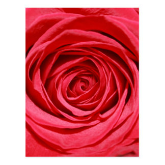 膚触りがよく赤いバラの花びらのロマンチックな花 ポストカード