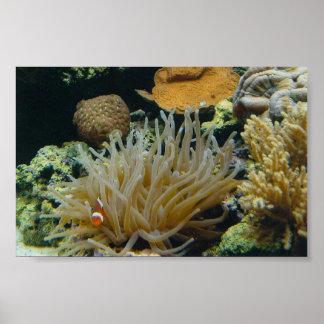 自信満々- clownfish (ポスター) ポスター