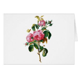自然から描かれるキャベツバラ カード