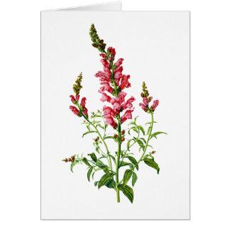 自然から描かれるピンクのSnapdragon カード