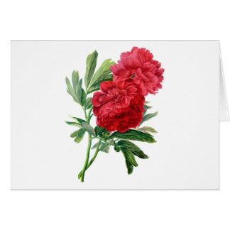 自然から描かれる赤いシャクヤク カード