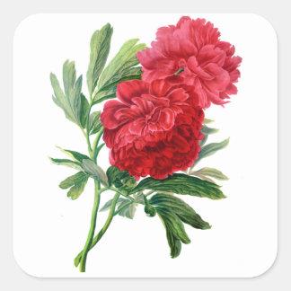 自然から描かれる赤いシャクヤク スクエアシール