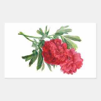 自然から描かれる赤いシャクヤク 長方形シール