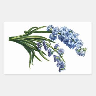 自然から描かれる青いHyacinth 長方形シール