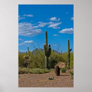 自然なサボテンの景色3994 ポスター