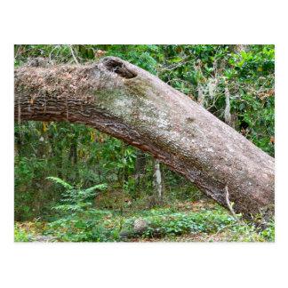 自然なフロリダ ポストカード