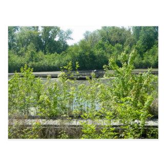 自然な沼地の写真 ポストカード