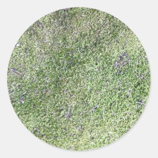 自然に成長する柔らかい緑のコケの草 ラウンドシール