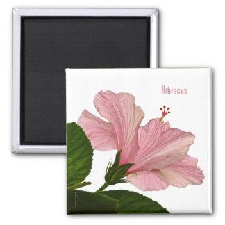 自然の写真撮影のピンクのハイビスカスのクローズアップの写真 マグネット