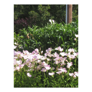 自然の写真CherryHILLニュージャージーアメリカNVN663 レターヘッド