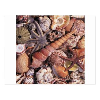 自然の水によって分類される貝のビーチ ポストカード