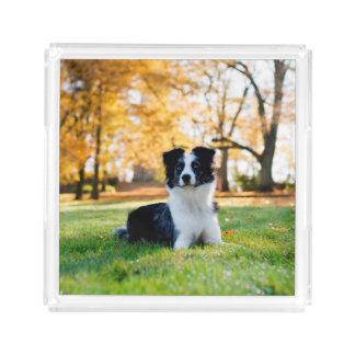 自然の犬 アクリルトレー