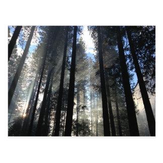 自然- WOWCOCO ポストカード