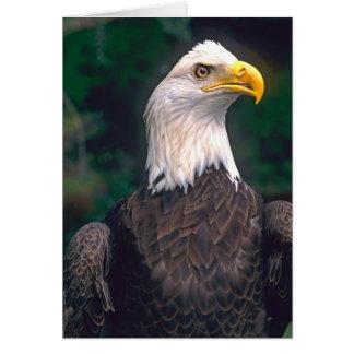 自由のアメリカの記号の白頭鷲 カード