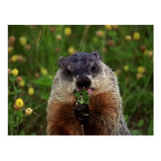 臭いがする春Groundhog ポストカード