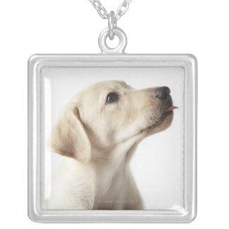 舌を突き出ているブロンドのラブラドールの子犬 シルバープレートネックレス