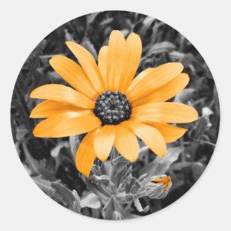 色のしぶきの春のフラッシュのアフリカデイジーの写真 ラウンドシール