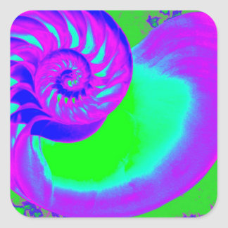 色の成長、オウムガイの貝 スクエアシール