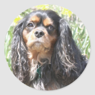 色彩の鮮やかで無頓着なチャールズ王スパニエル犬 ラウンドシール