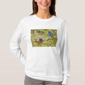 色彩の鮮やかな旗布のPasserinaのcitriaの)成人男子2 Tシャツ