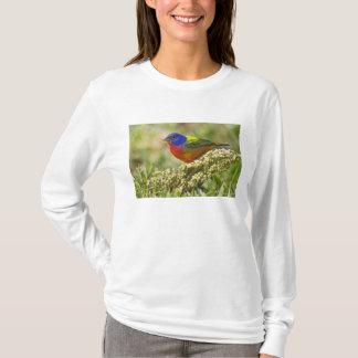 色彩の鮮やかな旗布のPasserinaのcitriaの)成人男子 Tシャツ