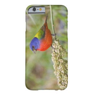 色彩の鮮やかな旗布(Passerianのciris)の男性に食べ物を与えること Barely There iPhone 6 ケース