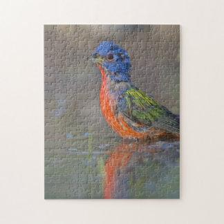 色彩の鮮やかな旗布(Passerinaのciris)の鳥の写真撮影 ジグソーパズル