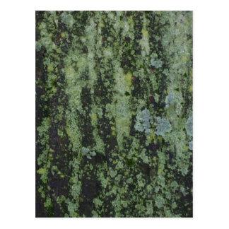 色彩の鮮やかな木-シリーズ1 ポストカード