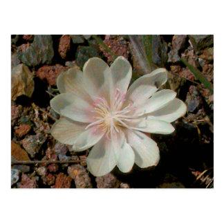 色彩の鮮やかな砂漠の花 ポストカード