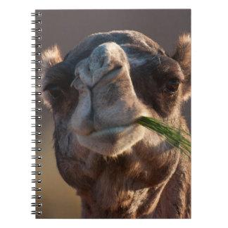 芝生で楽しんでいるこぶ日のラクダ ノートブック