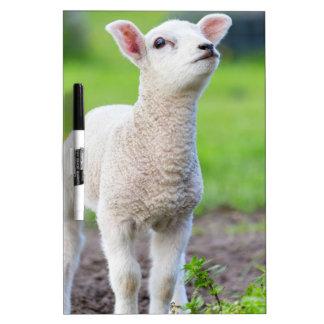 芝生に立っている1頭の白く生まれたばかりのな子ヒツジ ホワイトボード