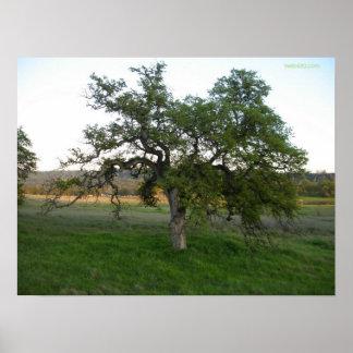 芝生のオークの木 ポスター