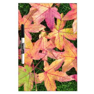 芝生の多くの多彩な秋のかえでの葉 ホワイトボード