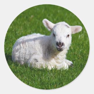 芝生の新生のかわいい子ヒツジ ラウンドシール