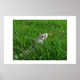 芝生の澄んな流れ ポスター