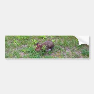 芝生の空腹なウサギ バンパーステッカー