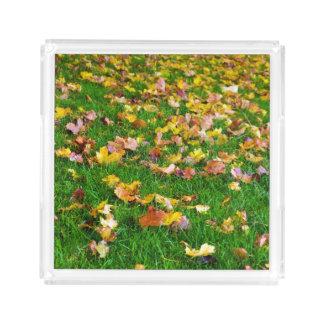 芝生の紅葉 アクリルトレー