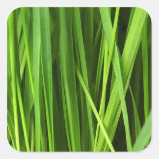芝生の背景 スクエアシール