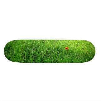 芝生 スケボー