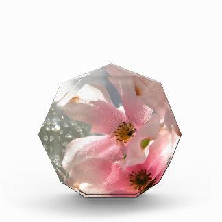 花および水晶 表彰盾
