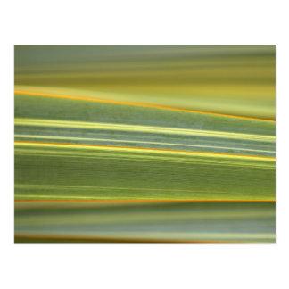 花のギフトのコレクションからの抽象芸術の葉 ポストカード