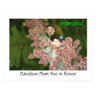 花のデイヴィッドソンのスモモの木 ポストカード