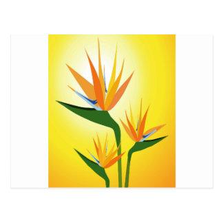 花のデザイン極楽鳥 ポストカード