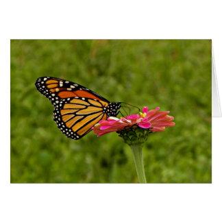 花のメッセージカードの(昆虫)オオカバマダラ、モナーク カード