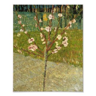 花のヴィンテージのフィンセント・ファン・ゴッホのアーモンド木 フォトプリント