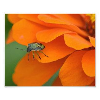 花の写真のプリントの昆虫 フォトプリント